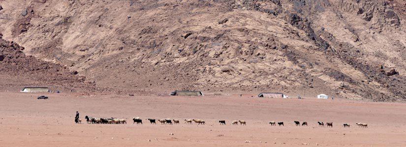 Dag 23 (28. mai) – Beduiner fra Levanten